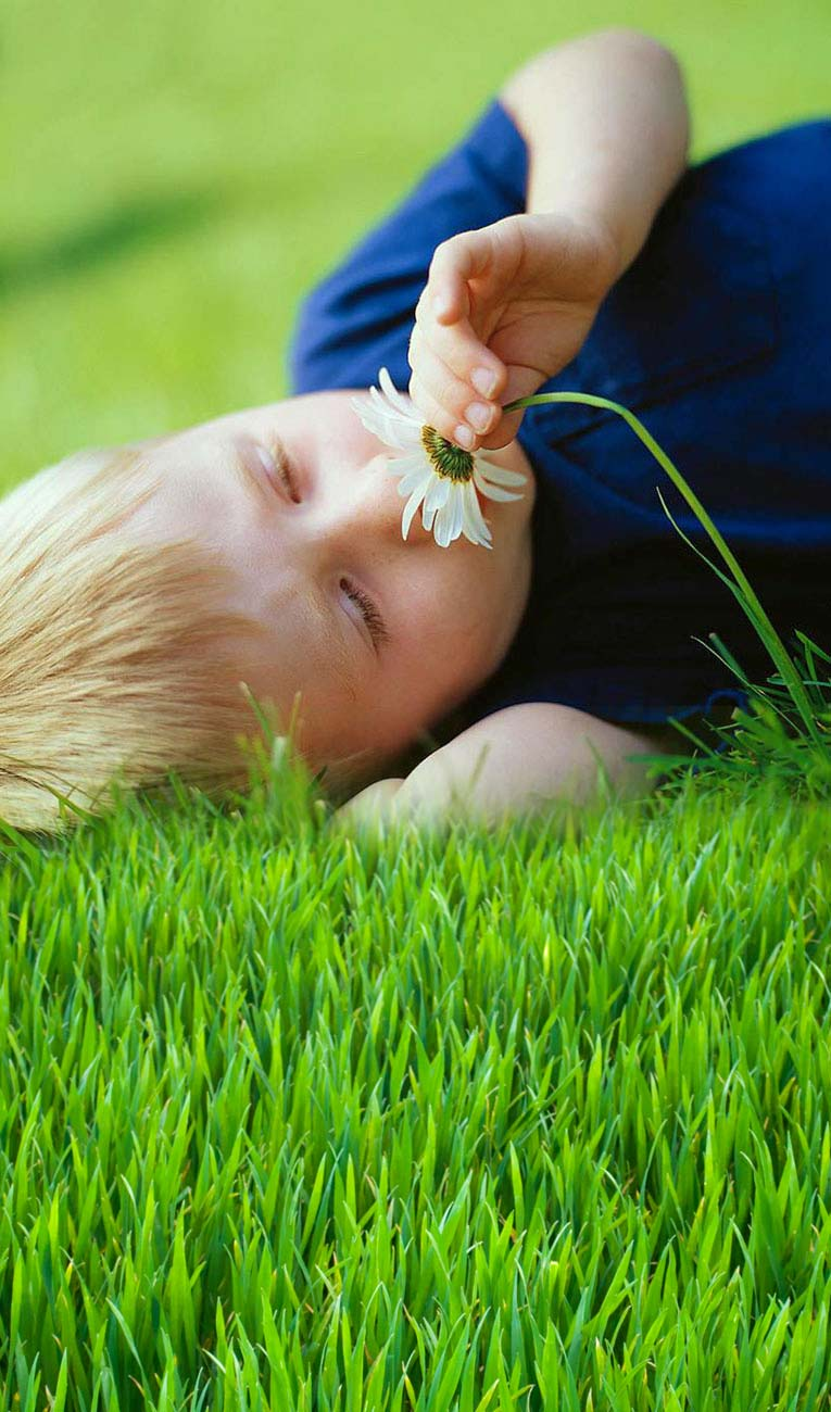 lawn care tips maintenance ideas for keeping your grass in establishing your new lawn